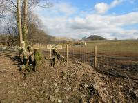 Fencing providing a wide riparian strip to protect stream
