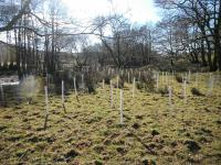 New deciduous woodland planting