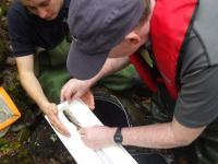 Measuring fish during electrofishing