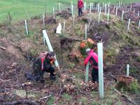 Tree planting at Irton